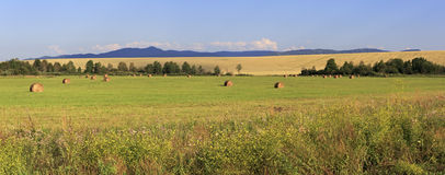 Beautiful panorama the sloping fields and Stock Photography