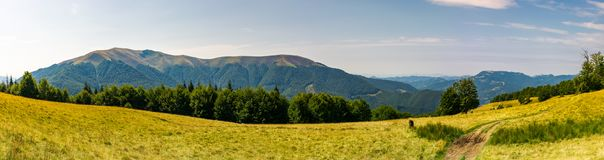 Beautiful panorama of summer landscape in mountain. Beech forest on a grassy meadow. huge mountain in the far distance Stock Photo