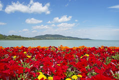 Beautiful panorama to Lake Balaton. With red flowers Royalty Free Stock Images