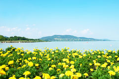 Beautiful panorama to Lake Balaton with yellow flo Royalty Free Stock Photo