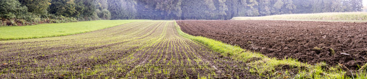 Beautiful panorama view of agricultural area Stock Images