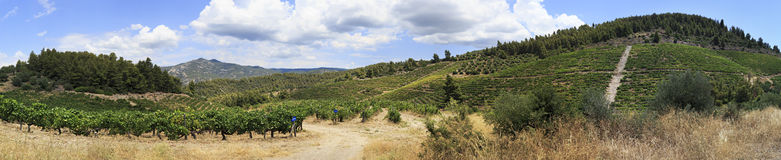Beautiful panorama of vineyards in the mountains. Royalty Free Stock Photo