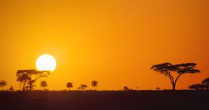 Beautiful panoramic african sunset in the Serengeti Park savannah plains, Tanzania, Africa. With silhouettes of acacia trees and the sun setting on the horizon stock photography