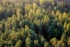 Beautiful panoramic photo over the tops of pine forest. Aerial v stock photos