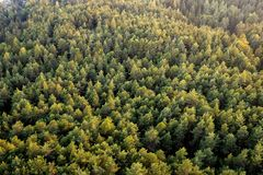 Beautiful panoramic photo over the tops of pine forest. Aerial view. From above. Top view. Beautiful panoramic photo over the tops of pine forest. Aerial view stock photo
