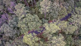 Beautiful panoramic photo over the tops of thick tree forest. Aerial view. stock photo