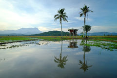 Beautiful panoramic rural landscape in the morning at paddy field Stock Images