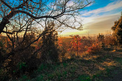 Beautiful panoramic scene with skyline autumn colors. Stock Photos