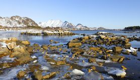 Panoramic view of fjord in low tide in winter with mountains in backgrond and beautiful stones and ice in foreground , lofoten isl royalty free stock photos