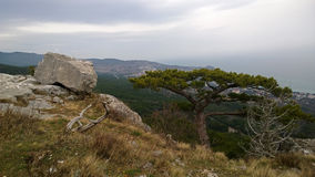 Beautiful panoramic view of the lonely tree on the hill and large stone boulders. The view down the mountain in cloudy weather Stock Photos