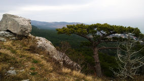 Beautiful panoramic view of the lonely tree on the hill and large stone boulders. The view down the mountain Royalty Free Stock Photo