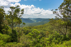 Free Beautiful Panoramic View Over Tropical Rain Forest Tree Canopies Royalty Free Stock Image - 93774106