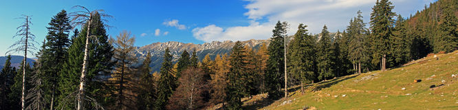 Beautiful panoramic view of the Piatra Craiului mountains Stock Photography