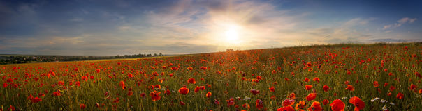 Beautiful panoramic view of the poppies at sunset Stock Photo
