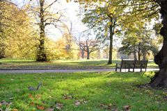 Panoramic view to the royal park in London in a sunny autumn day. Beautiful panoramic view to the royal park Kensington Gardens in London in a sunny autumn day stock photo