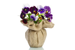 Beautiful pansies in a vase Royalty Free Stock Image