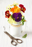 Beautiful pansy flowers. Stock Photos