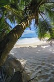 Beautiful paradise beach, anse bazarca, seychelles 7 Stock Photos