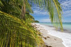 Beautiful paradise beach with palms and white sand. Costa Ric Stock Photography