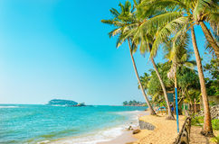 Beautiful paradise beach with tall palm trees Stock Photos