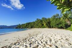 Beautiful paradise beach,white sand,turquoise water,palms, seych. Beautiful paradise beach anse bazarca on mahé. white sand,turquoise water,palm trees, granite Royalty Free Stock Images