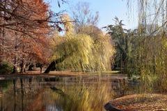 Beautiful park Stock Image