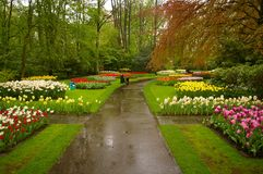 Beautiful park. Picture of a beautiful park full of flowers (Keukenhof in the Netherlands stock images
