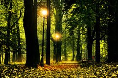 Beautiful park alley Stock Images