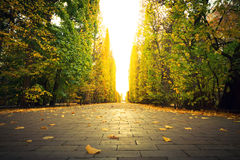 Beautiful park alley in autumn. Beautiful scenery in autumnal yellow park of Gdansk, Poland Royalty Free Stock Photography