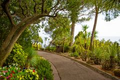 Monaco park alley. Beautiful park alley in Monte Carlo, Monaco. Footpath and palms and cactus. Bright green color stock images