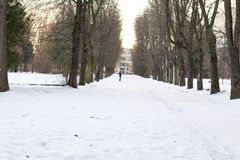 Beautiful park alley with silhoette of lonely people in winter sunny day. Trees and benches near footpath. Place for skiing and