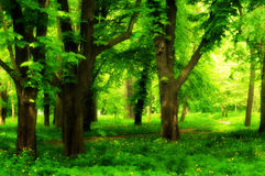 Beautiful park alley in summer Royalty Free Stock Image