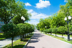 Beautiful park alley in summer Royalty Free Stock Photos