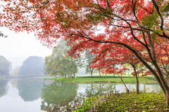 Beautiful park in autumn Stock Image