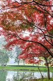 Beautiful park in autumn Royalty Free Stock Photography