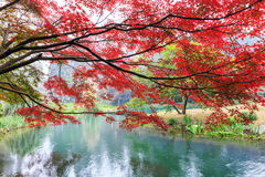 Beautiful park in autumn Royalty Free Stock Photos