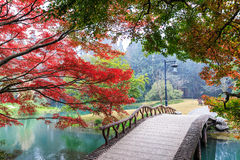 Beautiful park in autumn Stock Image