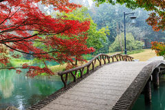 Beautiful park in autumn Stock Photos