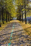 Beautiful park in an autumn sunny day Stock Photo