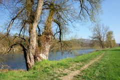 Beautiful park on banks of the Aare river on a sunny spring day in the village of Villigen, Switzerland. Beautiful park on banks of the Aare river on a sunny stock image
