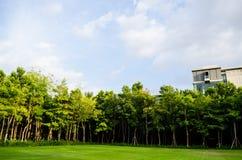 Beautiful park in blue sky. Beautiful park in deep blue sky Royalty Free Stock Photos
