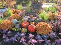 Pumpkins, colorful flowers and decorative grasses as a park`s center piece. A beautiful park with botanical gardens and ponds has a center piece of multi Royalty Free Stock Photo