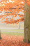 Beautiful park in bright autumnal colors Stock Photography