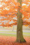Beautiful park in bright autumnal colors Stock Photos