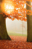Beautiful park in bright autumnal colors Stock Photo