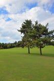 Beautiful park garden Stock Image
