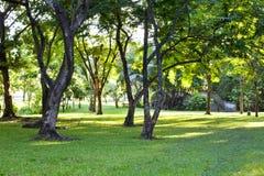 Beautiful Park Garden Royalty Free Stock Photos