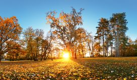 Beautiful park garden in atumn. Fall panorama in park at sunrise stock image