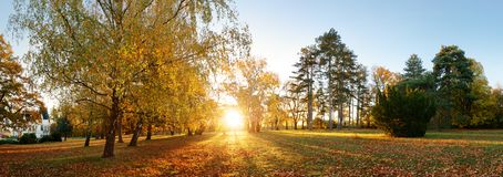 Beautiful park garden in atumn. Fall panorama in park at sunrise stock photo