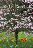 Beautiful park garden in spring. Royalty Free Stock Photos